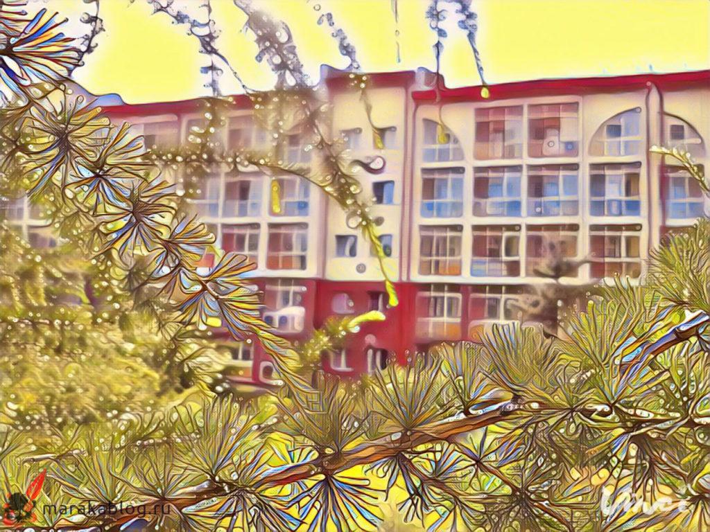 Фото: лиственницы в санатории